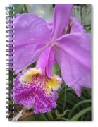 Violet Orchid Spiral Notebook