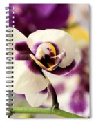 Violet Orchids Brushed With Gold Spiral Notebook