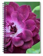 Violet Rose And Buds Spiral Notebook