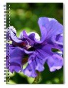 Violet Ruffles Spiral Notebook