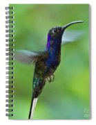 Violet Sabrewing Hummingbird Spiral Notebook