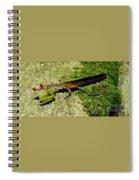 Violet Vision Spiral Notebook