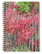 Virginia Creeper Vine On Dune Fence - Fall Colors Spiral Notebook