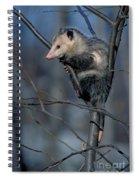 Virginia Opossum Spiral Notebook