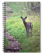 Virginia - Shenandoah National Park - White Tailed Deer Spiral Notebook