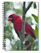 Vision In Red Spiral Notebook