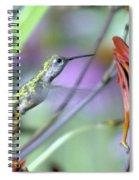 Vitality Of A Hummingbird Spiral Notebook