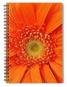 Vividacious Spiral Notebook