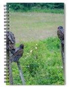 Vulture Fence Line 3 Spiral Notebook