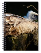Vulture Resting In The Sun Spiral Notebook