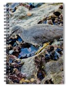 Wadering Tattler At Low Tide Spiral Notebook