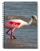 Wading Spoonbill Spiral Notebook
