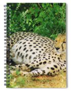 Waiting For Baby Cheetahs Spiral Notebook