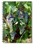 Waiting For Wine Spiral Notebook