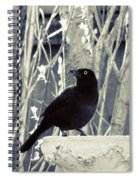 Waiting Grackle Spiral Notebook