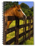 Waiting Patiently Spiral Notebook