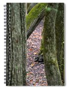 Walk Among The Trees Spiral Notebook