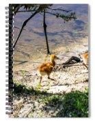Walking Around The Lake Spiral Notebook