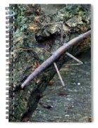 Walking Stick Spiral Notebook