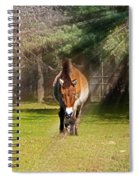 Walking Towards Me In Sunrays Spiral Notebook