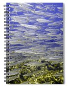 Wall Of Silver Fish Spiral Notebook