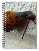 Wall Snail 1 Spiral Notebook