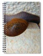 Wall Snail 2 Spiral Notebook