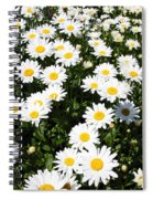 Wall To Wall Daisies Spiral Notebook