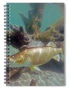 Walleye And Dardevle Spiral Notebook
