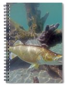 Walleye Pike And Dardevle Spiral Notebook