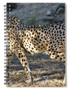 Wandering Cheetah Spiral Notebook