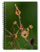 Wandering Violin Mantis Spiral Notebook