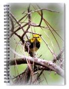 Warbler - Black-throated Green Warbler Spiral Notebook