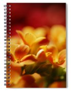 Warm Spring Glow Spiral Notebook