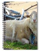 Was I Baaaad? Spiral Notebook
