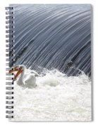 Washington White Pelicans Spiral Notebook