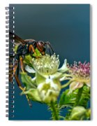 Wasp Spiral Notebook