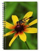 Wasp On A Susan Spiral Notebook