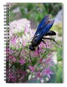 Wasp On Sedum Spiral Notebook