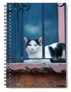 Watchful Cat, Mexico Spiral Notebook
