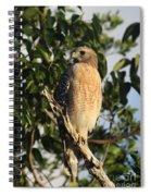 Watchful Eyes - Red Shouldered Hawk Spiral Notebook