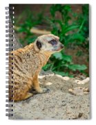Watchful Meerkat Spiral Notebook