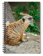 Watchful Meerkat Vertical Spiral Notebook