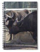 Water Buffalo - 2 Spiral Notebook