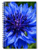 Water Color Bachelor's Button Spiral Notebook