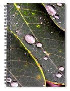 Water Drops Leaves Spiral Notebook