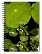 Water Drops Bristol Rhode Island Spiral Notebook