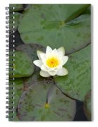 Water Lily - White Spiral Notebook