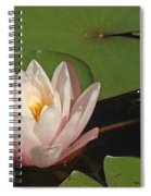 Water Lily 5 Spiral Notebook