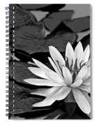 Water Lily Black And White Spiral Notebook